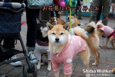 お初です!上野公園の桜♪