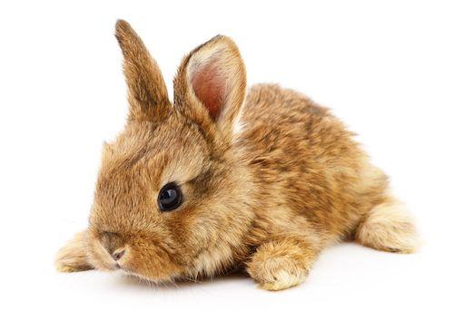 Cute Baby Rabbit Wallpapers Zajac Ako Dom 225 Ci Mil 225 čik Hlodavce Hlodavce Zvery