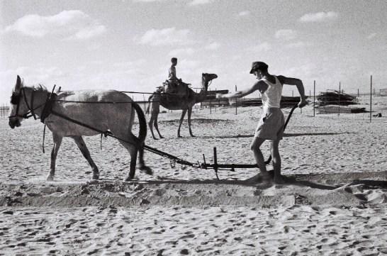 KIBBUTZ URIM, Palestina Mandataria (1 luglio 1947). Un pioniere israeliano si cimenta con le durissime condizioni climatiche della zona. (Photo by Zoltan Kluger/GPO via Getty Images)