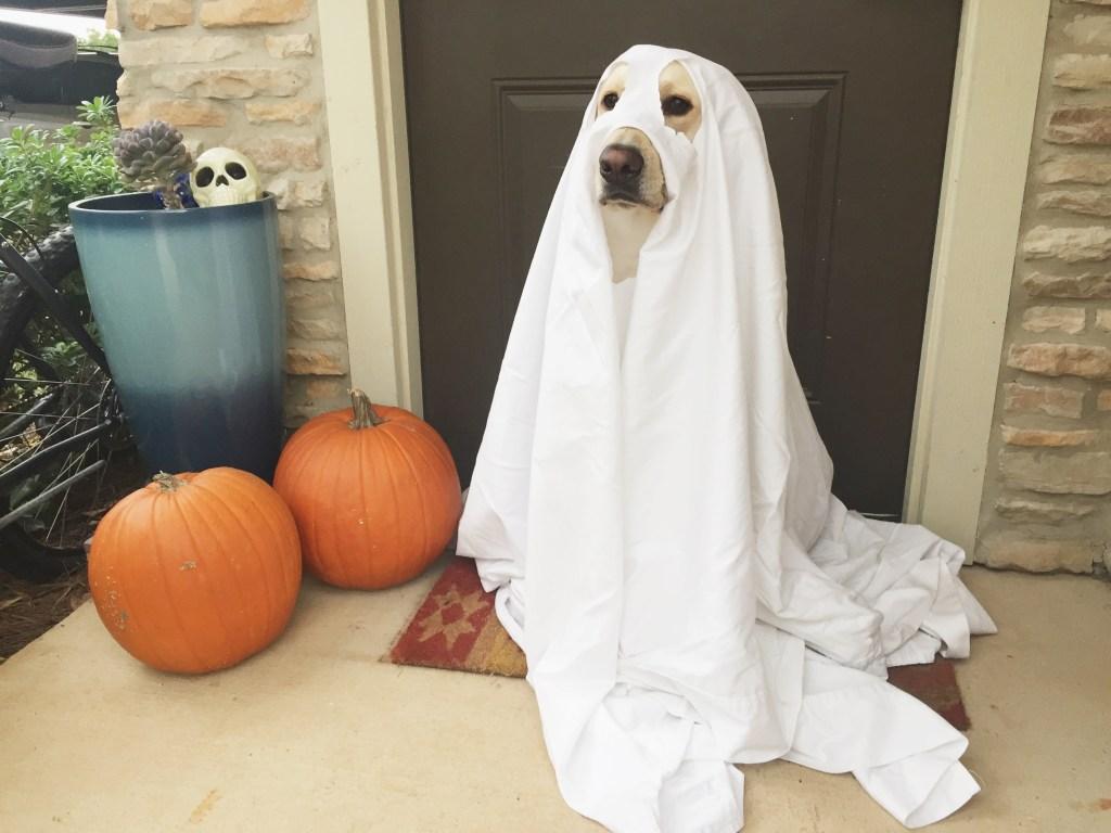 Top 5 Easy DIY Dog Halloween Costumes