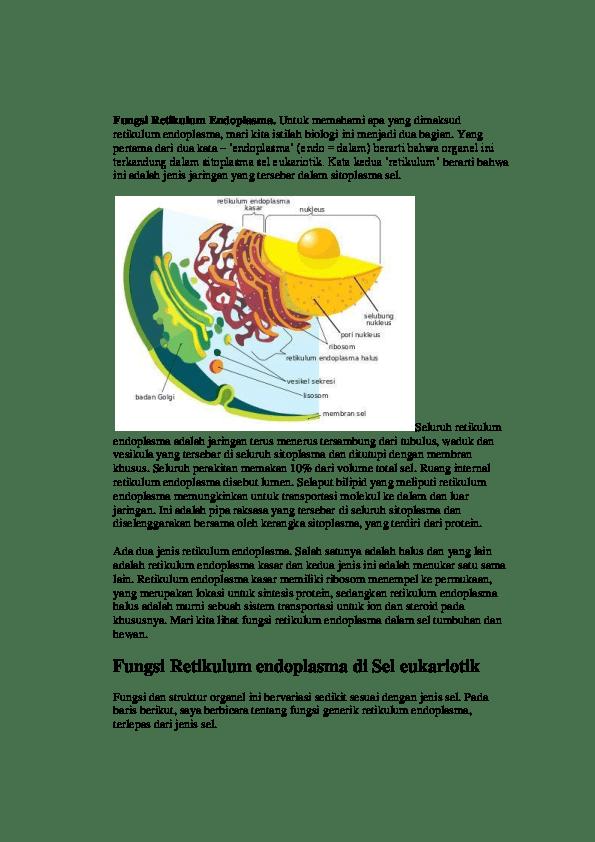 Retikulum Adalah : retikulum, adalah, FISHE, QueensHestey, Slaluu, Academia.edu