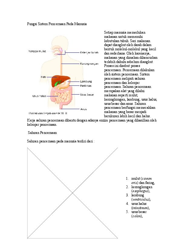 Fungsi Ptialin : fungsi, ptialin, Enzim, Ptialin, Tidak, Dapat, Bekerja, Lambung, Karena, Kumpulan, Kerjaan
