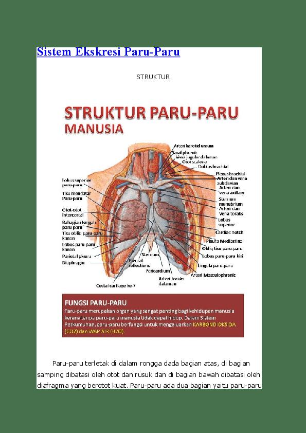 Apa Fungsi Paru-Paru Sebagai Organ Ekskresi Adalah? Ini