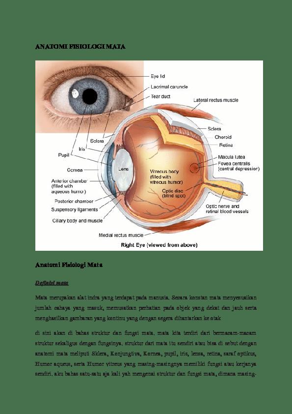 Fungsi Lensa Pada Mata : fungsi, lensa, ANATOMI, FISIOLOGI, Liska, Septiana, Academia.edu