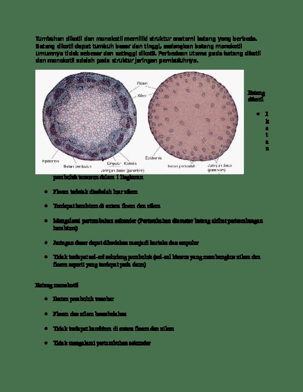 Batang Monokotil Dikotil : batang, monokotil, dikotil, Gambar, Struktur, Primer, Batang, Monokotil, Dikotil, Terkait