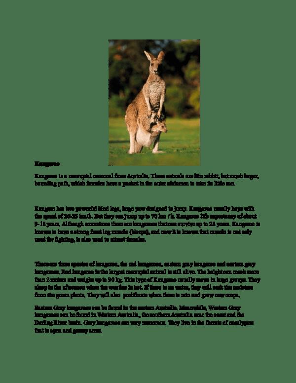 Contoh Report Text Singkat : contoh, report, singkat, Contoh, Report, About, Kangaroo, Artinya, Academia.edu