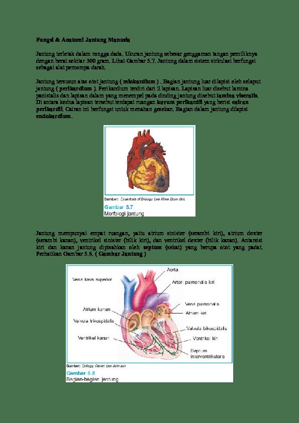 Tekanan Darah Saat Darah Meninggalkan Jantung Disebut : tekanan, darah, meninggalkan, jantung, disebut, Atrium, Setiawan, Academia.edu