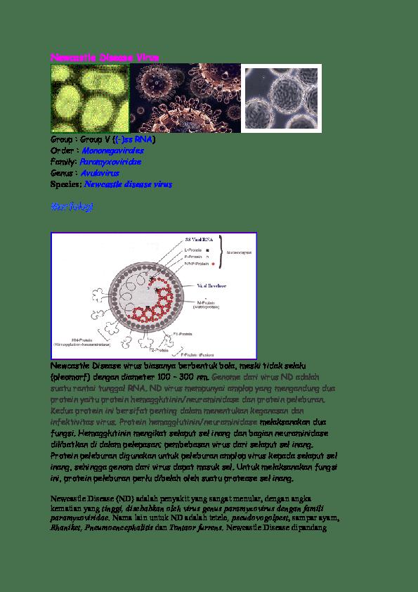 DOC) Newcastle Disease Virus | devi fernanda - Academia.edu