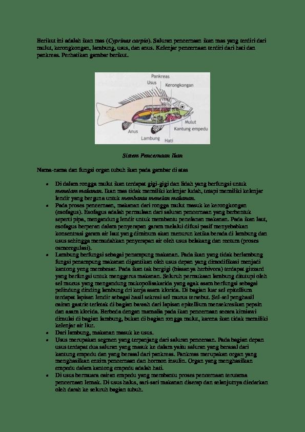 Fungsi Organ Tubuh Pada Ikan : fungsi, organ, tubuh, Bagian, Pencernaan, Yuyun, Retno, Academia.edu
