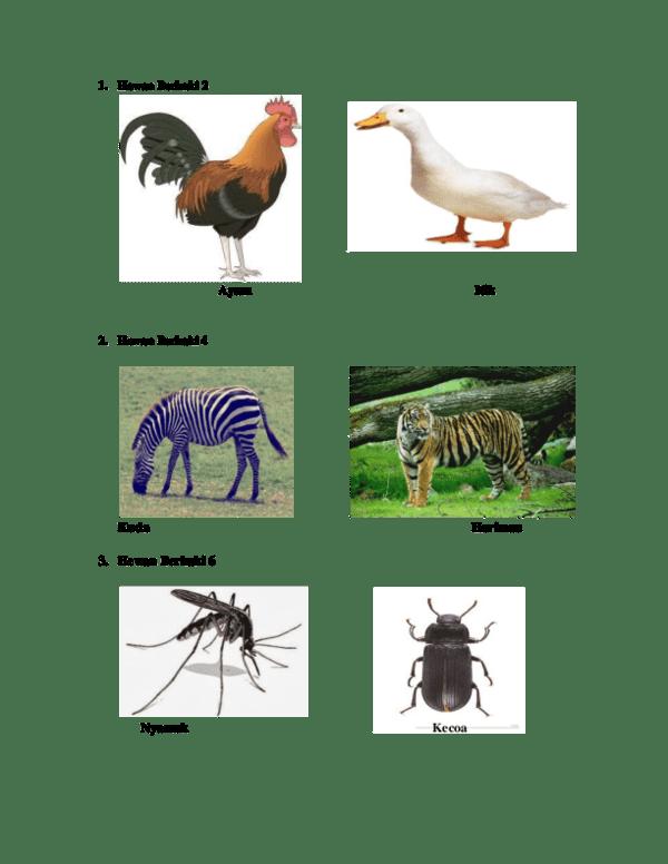 Himpunan Hewan Berkaki Empat : himpunan, hewan, berkaki, empat, Gambar, Binatang, Berkaki, Gratis, Terbaru, Hewan