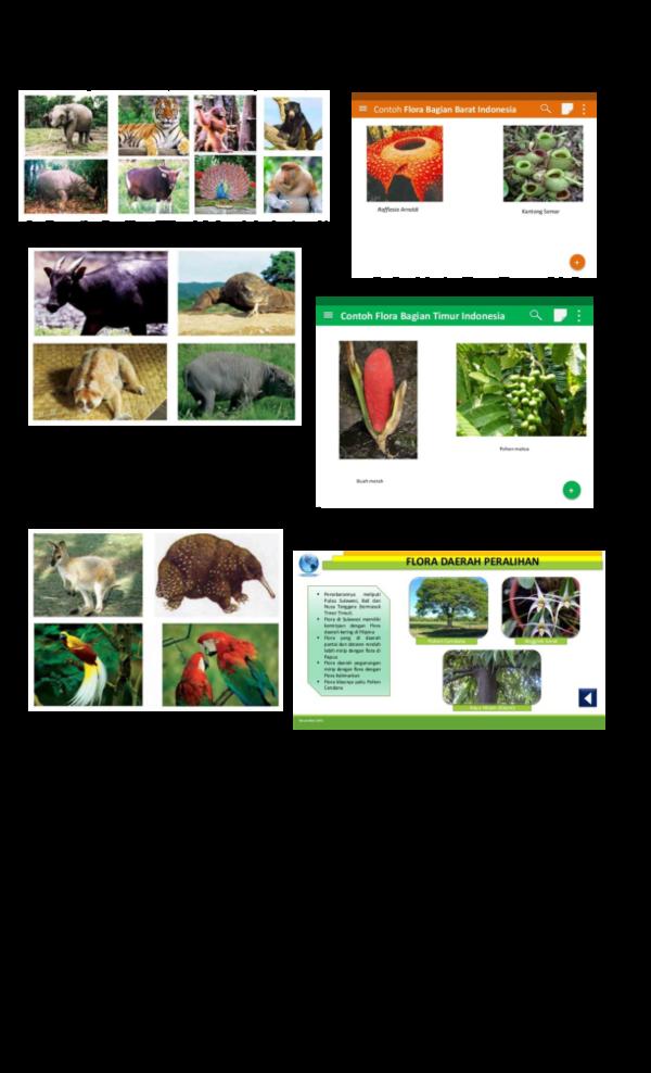 Flora Dan Fauna Tipe Australis : flora, fauna, australis, Gambar, Flora, Peralihan, Beserta, Namanya, Gratis, Hewan