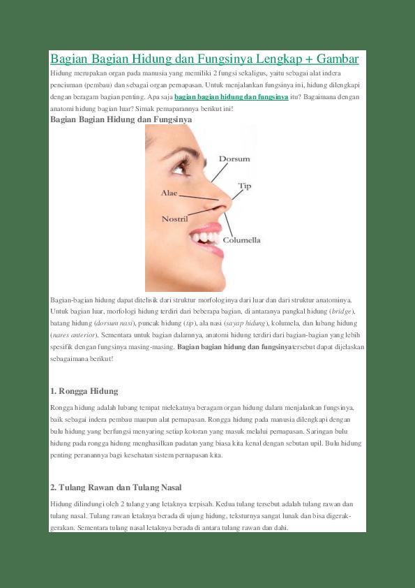 Anatomi Hidung Dan Fungsinya : anatomi, hidung, fungsinya, Bagian, Hidung, Fungsinya, Informasi, Dunia, Kesehatan