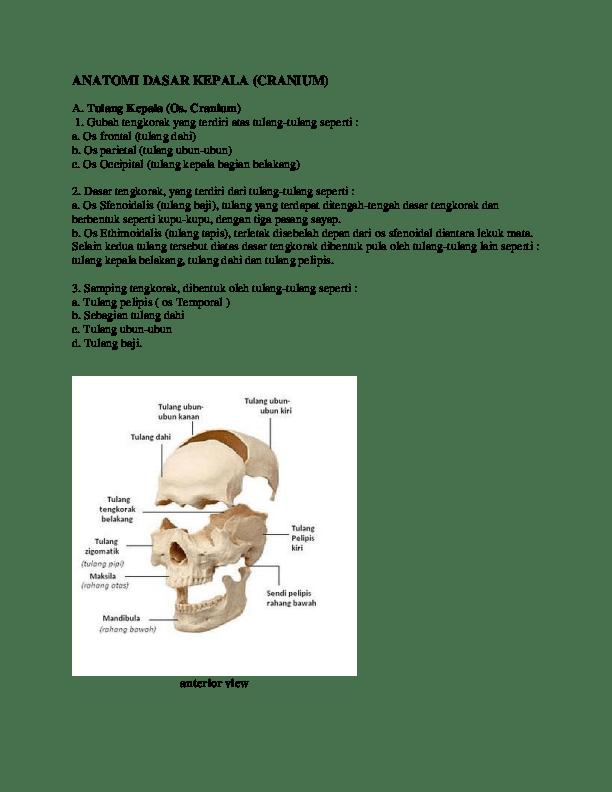 Gambar Tulang Baji : gambar, tulang, ANATOMI, DASAR, KEPALA, (CRANIUM, Ichwal, Maulana, Academia.edu