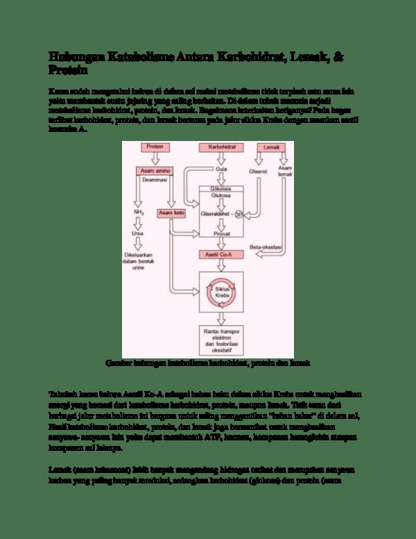 Keterkaitan Metabolisme Karbohidrat Lemak Dan Protein : keterkaitan, metabolisme, karbohidrat, lemak, protein, Hubungan, Katabolisme, Antara, Karbohidrat,, Lemak,, Protein, Annisa, Khairani, Academia.edu