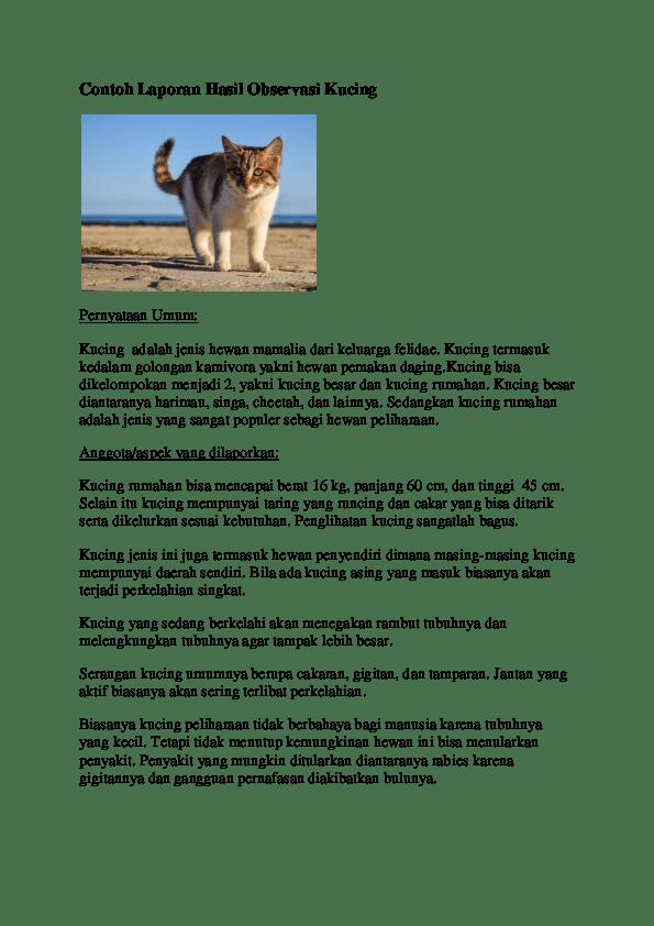 Laporan Hasil Observasi Tentang Kucing Cute766