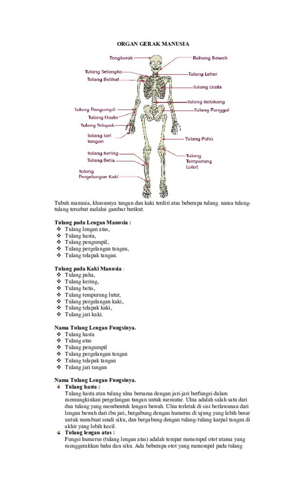 Fungsi Tulang Jari Kaki : fungsi, tulang, RANGKUMAN, MATERI, SUBTEMA, Miftahul, Hamid, Academia.edu