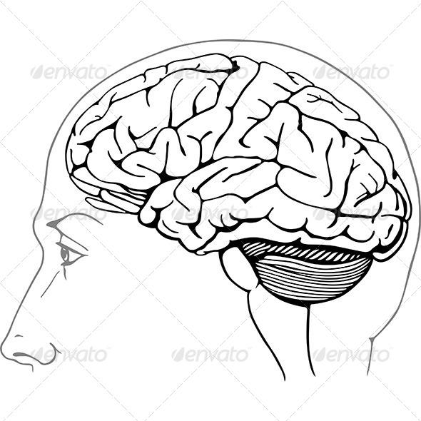 Human Brain Drawing