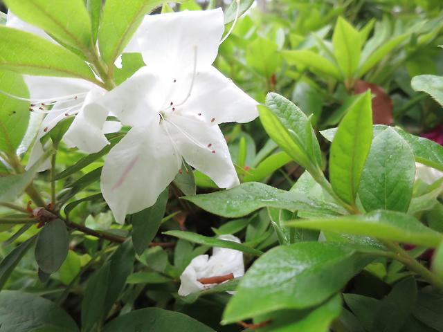 Takamatsu Flower