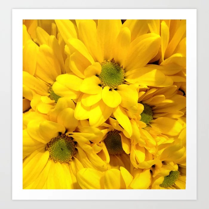 Sunday's Society6 | Photo of yellow daisies, close-up