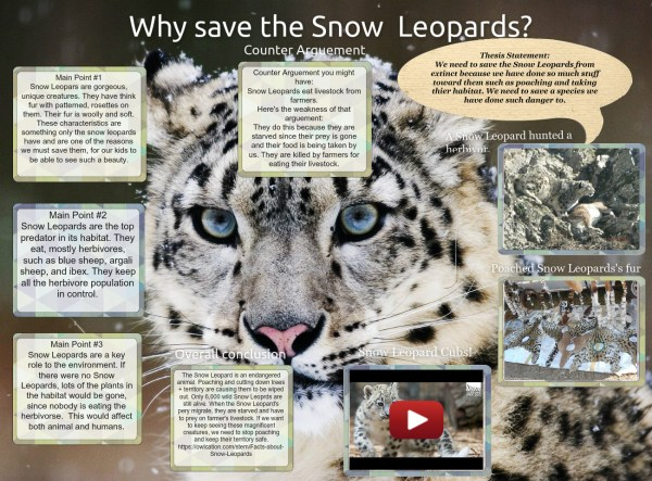 Snow Leopards Text Music Video Glogster
