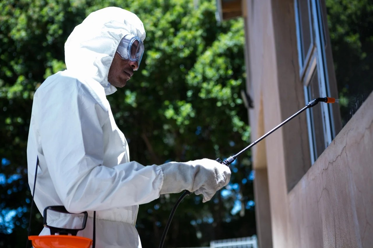 Importance Of Termite Inspections Winter