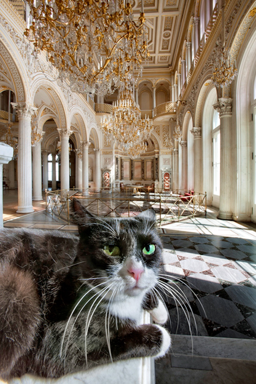 Russia Hermitage Museum Cats