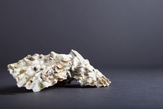 ANW_Oysters_01