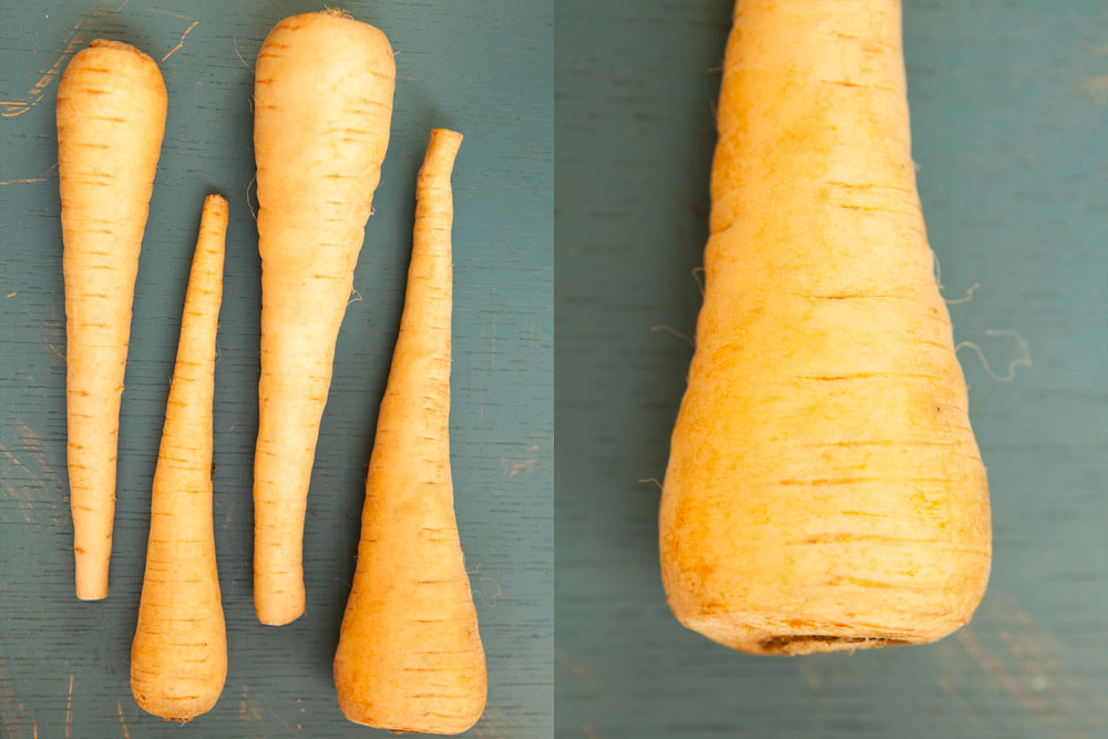 Northwest Fall Produce Parsnip