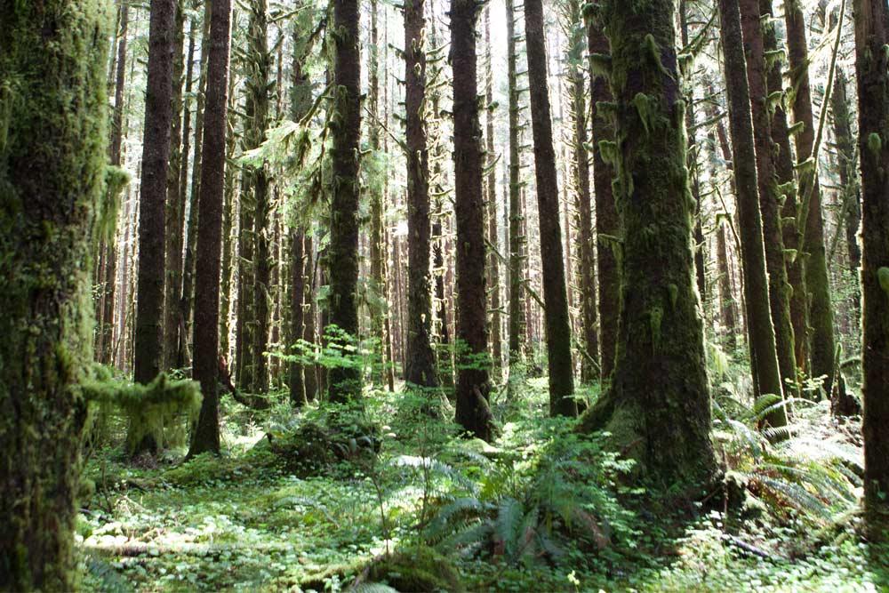 wild trails forest