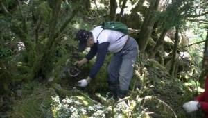 1217林管處獵具取締與拆除
