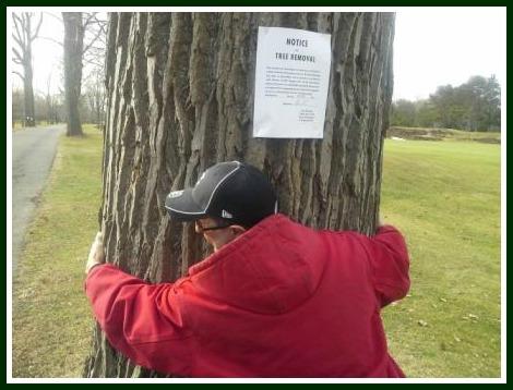 Longshore trees -- courtesy Greg Abshire