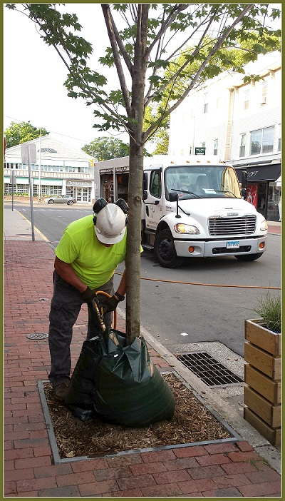 Tree care on Main Street, earlier this year.