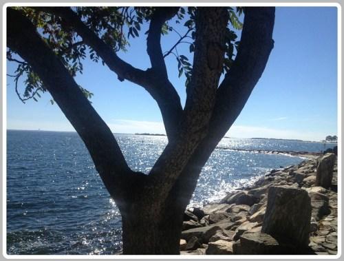 Beach 1 - October 12 2014