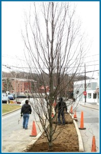 Among the tree projects last year: the median on Jesup Road.