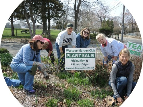 Among the Westport Garden Club's many activities: keeping the Compo Beach entrance looking gorgeous. Members were hard at work recently. (Photo/Ann Pawlick)