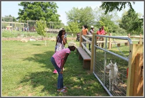 Children of UN staffers enjoy Wakeman Town Farm. Many UN families seldom leave New York, jUNe Day organizers note. (Photo/Carroll Hubbard)