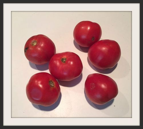 The actual tomatoes, given away at Crossroads Hardware.
