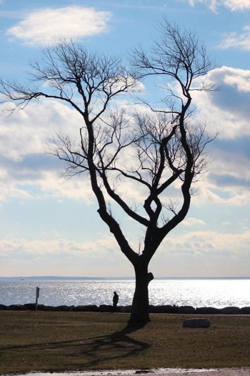 Sherwood Island - 2 - Gene Borio