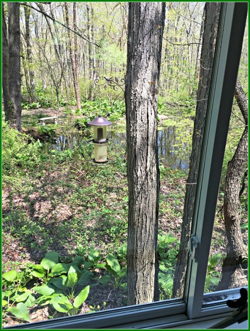 GiGi's view, out the caboose window.