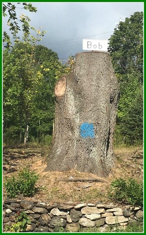 bob-the-tree