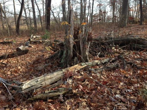 sherwood-island-woods-steve-axthelm