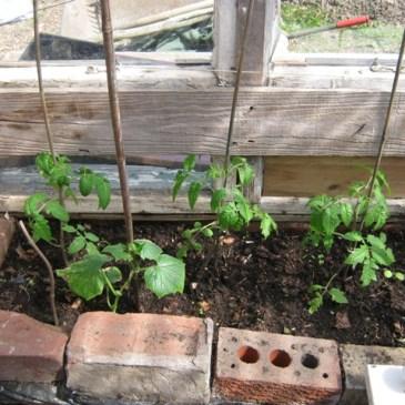 Nettles and seedlings!!