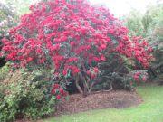 Savill Gardens - tree
