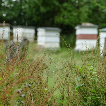 Pesticides threaten bees