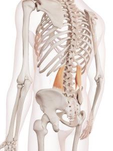 07f1d06b2e748819d58109bea6e719df 225x300 - 腰痛も疲労も一瞬で楽に!腰痛マッサージの方法!誰でもできるよ♪