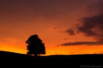 Linner Linde, Linde von Linn, Sonnenuntergang, sunset, Aargau