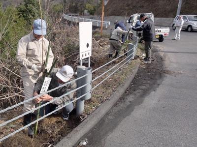 奥山ダム周辺に植樹「私の桜」