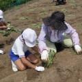重井康和会 児童と芋苗植え