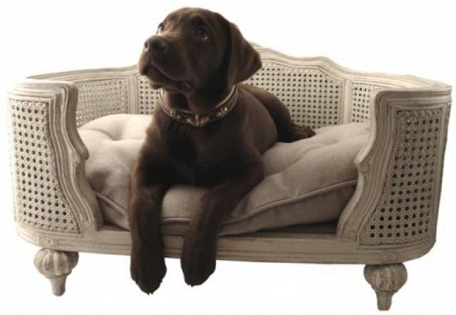 Canapé ou panier pour chien : quelles différences ?
