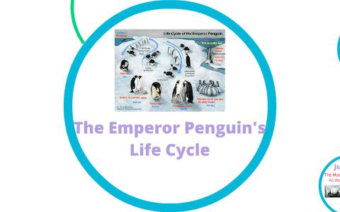 Emperor Penguin Life Cycle By Frank Byadunia